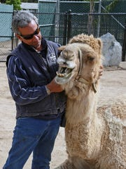 """""""Show your teeth when you smile"""" Charlie Sammut plays with Tucker in the new camel exhibit."""
