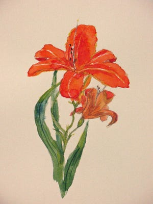 Daylilies often signal the location of old gardens and home places