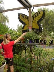 At the Tom Allen Memorial Butterfly garden, you will see a variety of butterflies in their natural habitat in all stages of their development, from egg to caterpillar to cocoon to loveliness in flight.