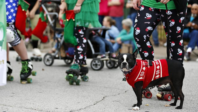 Bruce, a Boston terrier, waits with the Springfield Roller Girls for the start of last year's Downtown Springfield Christmas Parade.