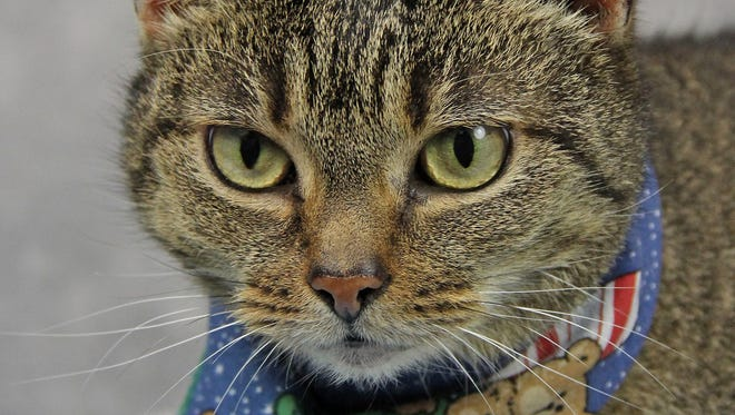 Xena is a lap cat who has lived with dogs, cats and children.