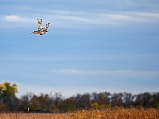 South Dakota Pheasant Hunting Opener