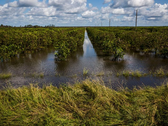 florida-agriculture-091317