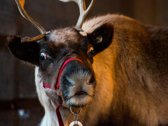 YDR-SH-120817-santas-reindeer-3.jpg