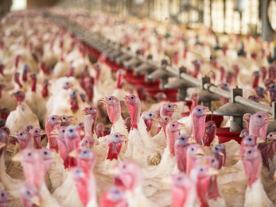 Turkey Could Cost You More This Thanksgiving