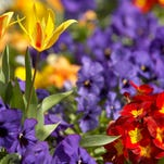 Find your favorite gardening related events, activities around Las Cruces.