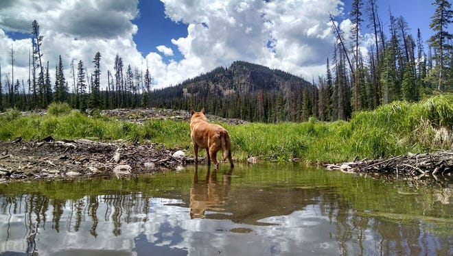 The winning photo of August's Xplore Photo Contest, featuring Wrigley, playing in the water near a campsite along Long Draw Road.