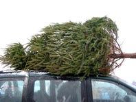 $5 off any Christmas Tree