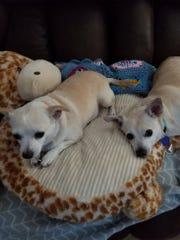 Sammy and Hal snuggle together.