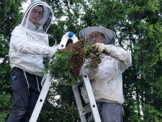 Zev Oster rescues a beehive. He owns and operates Rockland