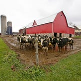 Wisconsin dairy farmers: Life in their own words