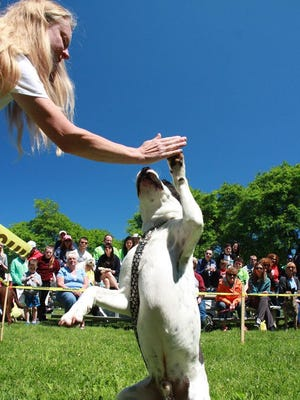 An adoptable dog from RAS/Verona Street Animal Society gives a hi-five during a pet contest.