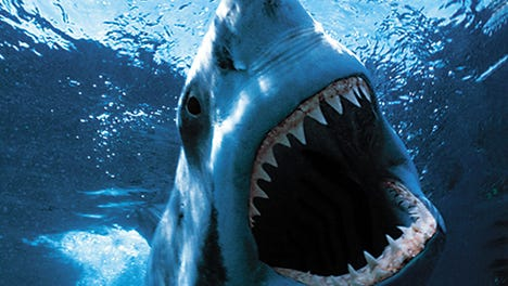 """When a gigantic great white shark begins to menace the small island community of Amity, a police chief, a marine scientist and grizzled fisherman set out to stop it in the 1975 film """"Jaws."""""""