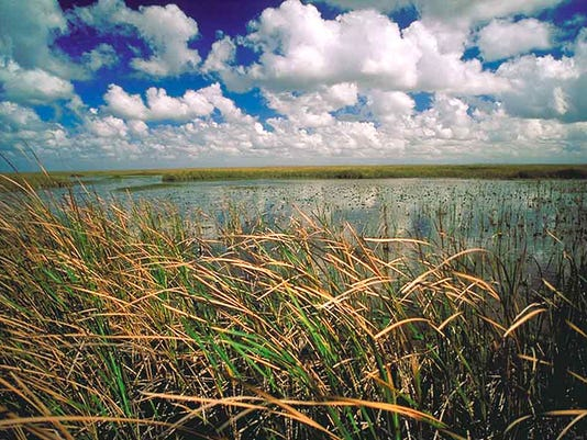 NOT FOR PRINT everglades grass.JPG