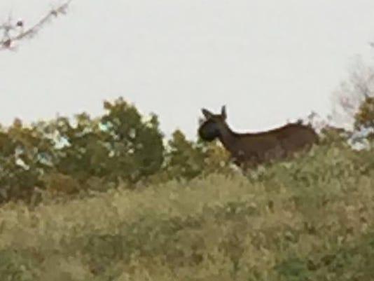 636449637309011491-deer-bucket.jpg