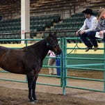 CSU's Equine Science Program will hold its annual CSU Legends of Ranching Performance Horse Sale on April 25.