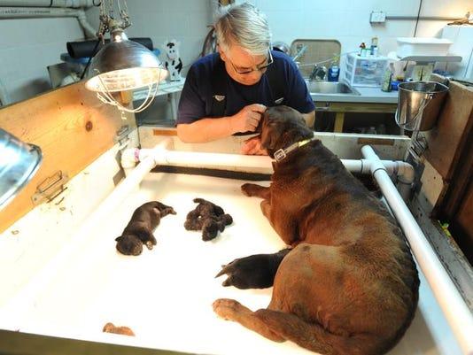 zan 0425 poisoned dogs update 001.JPG