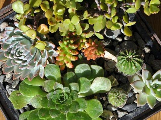 SNA0103 home terrariums COVER photo