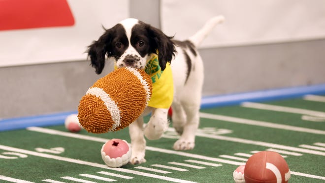 The top dogs are ready to go for Animal Planet's 'Puppy Bowl XII.'
