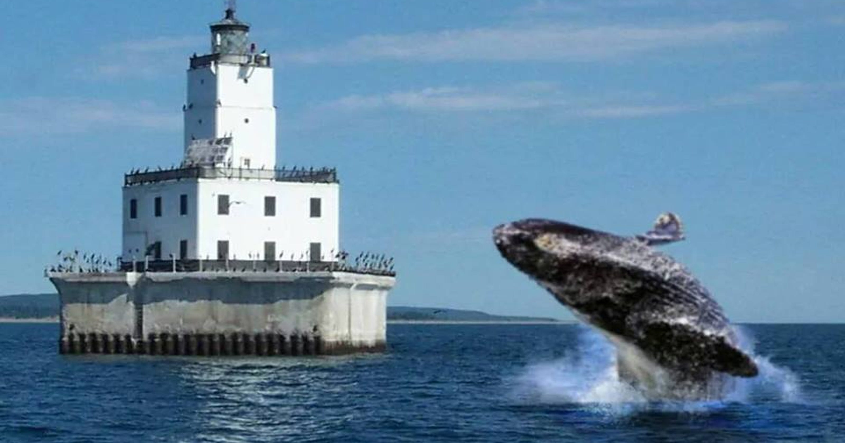 Heres A Whopper Whale Watching In Lake Michigan