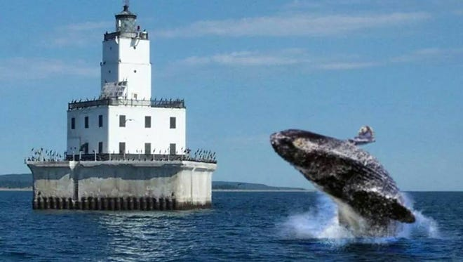 """Evidence"" such as this photo from the Lake Michigan Whale Migration Facebook page  purports to show that whales do, indeed, live in Lake Michigan (that's the North Manitou shoal light in the baciground). In fact, they don't."