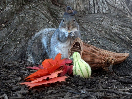 This undated photo shows Sneezy, a squirrel that lives
