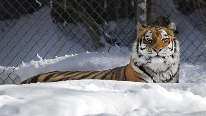 Admission is free for kids 11 and under at Seneca Park Zoo in February. In addition, people who pay a full-price admission in February will receive a voucher for a free visit in the summer.