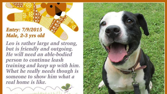 Leo is available for adoption at Animal Welfare League's shelter.