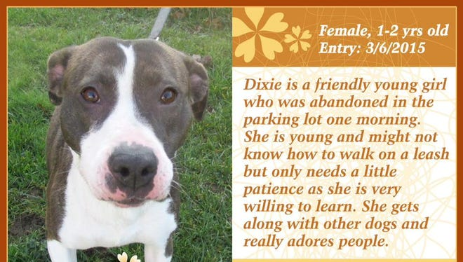 Dixie is available for adoption at the Animal Welfare League shelter.
