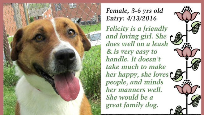 Felicity is available for adoption at Animal Welfare League in Richmond.