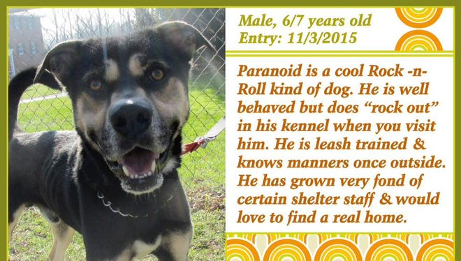 Paranoid is available for adoption at Animal Welfare League.