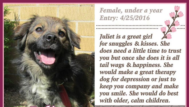 Juliet is available for adoption at Animal Welfare League.