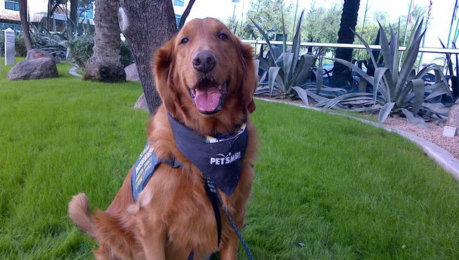 The Maricopa County Attorney's Office first victim-support dog, Sam, is expected to retire from his six-year career by the end of July, the office said.