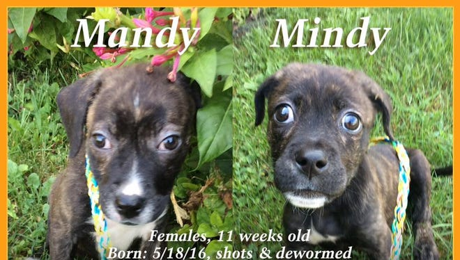 Mandy and Mindy are available for adoption at Animal Welfare League.