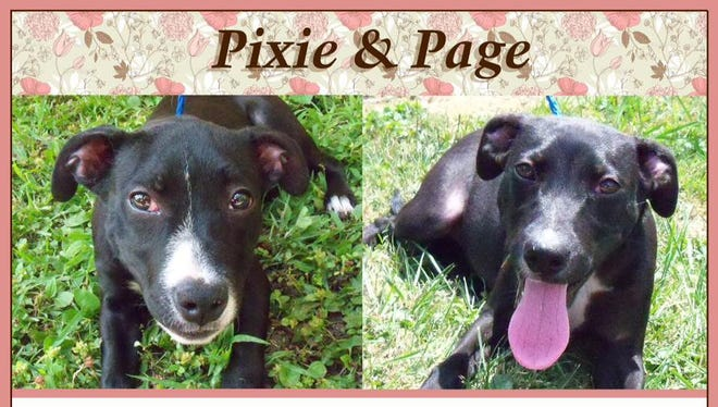 Pixie and Page are available for adoption.