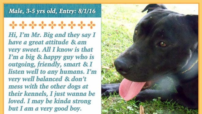 Mr. Big is available from Animal Welfare League.
