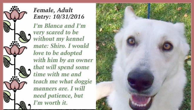Blanca is available for adoption at Animal Welfare League.