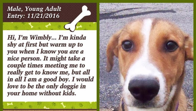 Wimbly is available for adoption at Animal Welfare League.