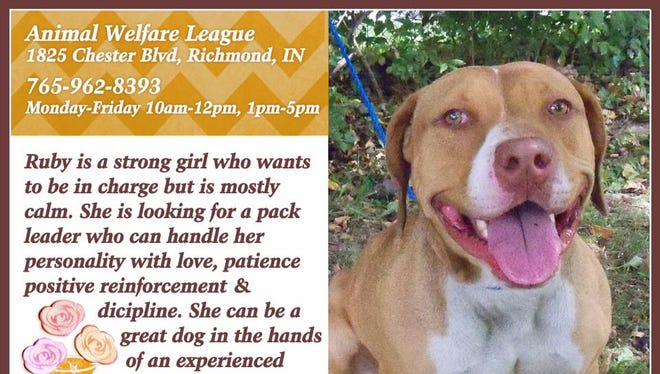 Ruby is available for adoption at Animal Welfare League.