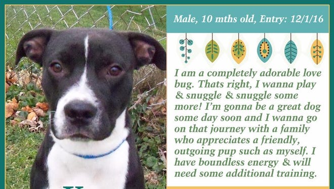 Kao is available for adoption at Animal Welfare League.