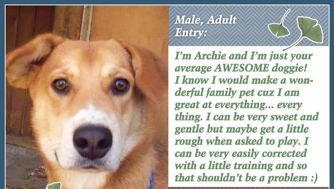 Archie is still available for adoption at Animal Welfare League.