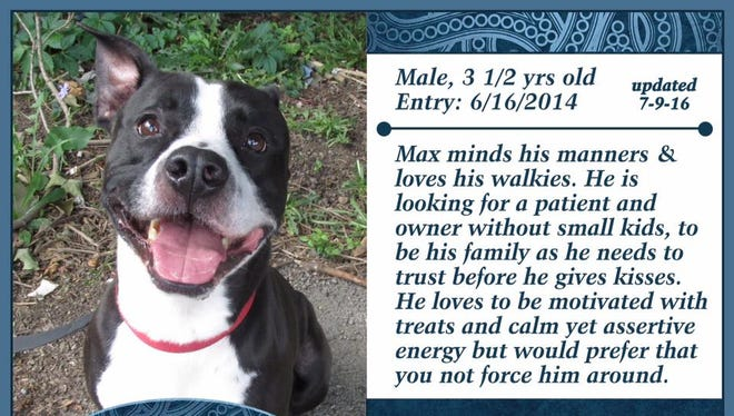Max is available for adoption at Animal Welfare League.