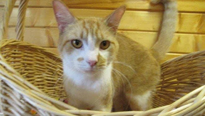 Gatsby is the Animal Control Pet of the Week,