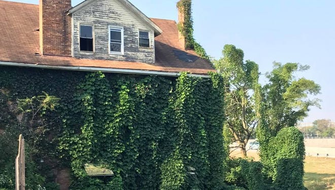 This abandoned house near the Interstate-71 and Martin Luther King interchange is covered in kudzo, an aggressive invasive species. The house is scheduled for demolition and the vines for removal.