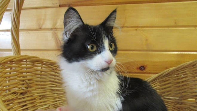 Temmy is the Pet of the Week