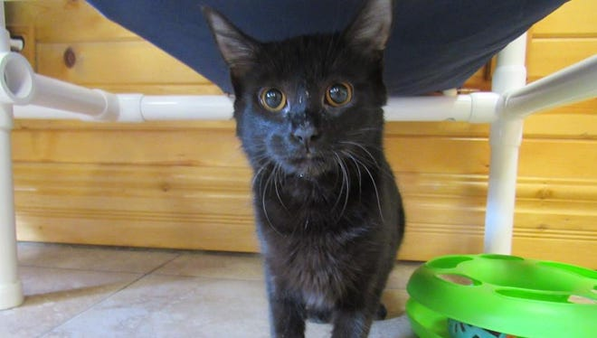 Midgie is the Animal Control Pet of the Week.