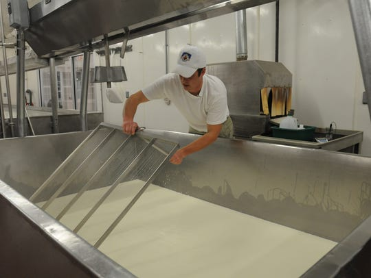 Jon Metzig slices the cheese which will make the curd