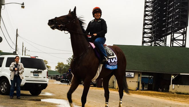 Brody's Cause on Saturday at Churchill Downs.