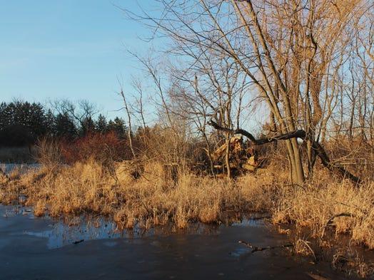 Schaumburg Prairie Nature Center