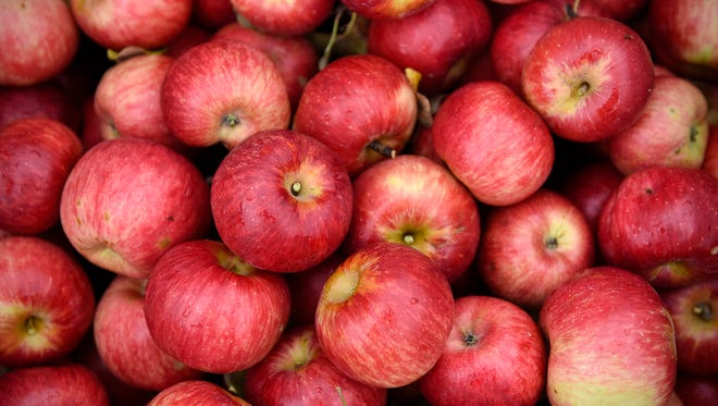 Picked apples sit in a crate to be sorted Wednesday, Sept. 7, 2016 at Collegeville Orchards in Collegeville.